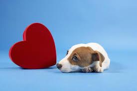 Image result for dog love