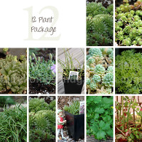 Package of 12 Miniature Plants for Fairy Gardens
