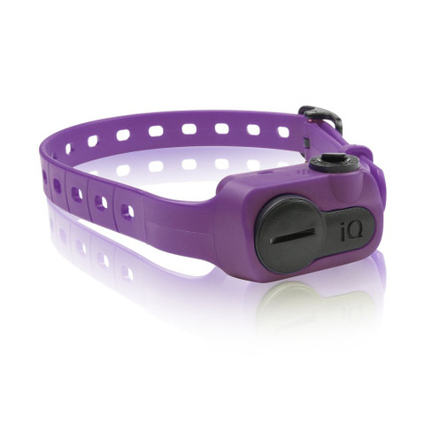Dogtra iQ No Bark Collar Purple (IQ-BARK-PUR)