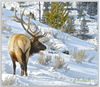 Original Photograph from Yellowstone National Park by Jo Anne Kelly Richards