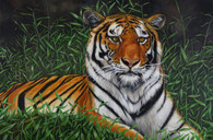 "24"" x 36"" Tiger Painting ""Zhanna"""