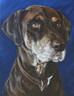 "16""  X 20"" Custom Pet Painting- One Pet, No Background"
