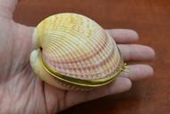 Cardium Pesodolima Shell Trinket Box
