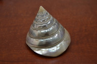 Polished Silver Peral Trochus Cone Shell 3""
