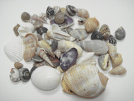 100 Pcs Small Tiny Mix Seashell Beach Craft