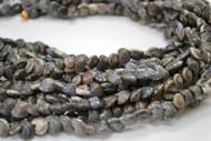 Drilled Black Pearl Umbonium Seashell Beads