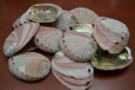 "Red Abalone Seashell (One Side Polished) 3"" - 4"""