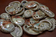 "Small Polished Both Sides Red Abalone Seashell 1 1/2"" - 2"""