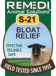 Bloat Relief in Sheep