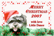 Its a dogs life - photo Christmas card made using photo of a pet dog