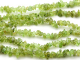 "Peridot Chip Gemstone Beads - 32"" strand (GS2041)"
