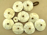 Large Etched Naga Shell Beads - 51mm (NP404)