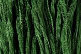 "Leaf Green Hand Stitched Silk Fairy Ribbon 42"" (SK1016)"