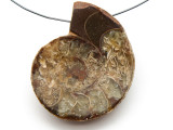 Ammonite Pendant 43mm (AM537)