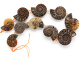 Ammonite Pendants 30-40mm - Set of 10 (AM606)