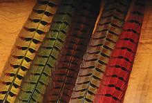 Ringneck Pheasant Tail Feathers- Yellow, Olive, Brown, Natural, Red (shown left to right)