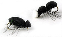 Wapsi Foam Ant and Beetle Kit