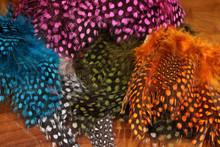 Spirit River UV2 Large Eyed Guinea Feathers