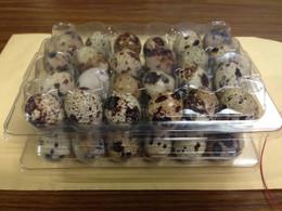 standard-quail-egg-container