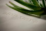 Beck to Nature Aloe Vera Mattress Cover for KOKO Eco Crib Wool Mattress