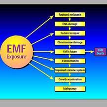 emf-exposure.jpg