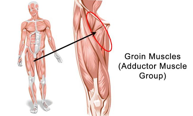 Image result for Groin