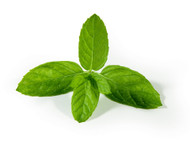 Peppermint (Organic) PG-Free