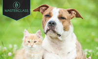 CANNABIS FOR PETS: EVERYTHING YOU NEED TO KNOW TO TREAT YOUR SICK ANIMAL SAFELY & EFFECTIVELY