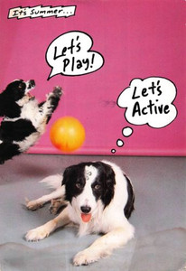 Let's Active Every Dog Has His Day I.R.S. Records Promo Postcard #2 1988