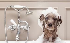 brownscruffydog-300px.jpg