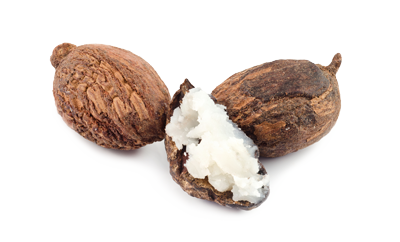 Shea Butter Nuts on a White Background