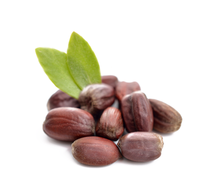 Jojoba Seeds with Green Leaf on White Background
