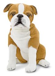 Myles the English Bulldog