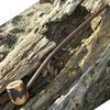 Mountaineer Pipe   FloggleWerks