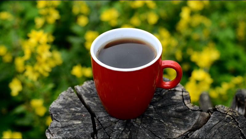 cordyceps-tea.jpg