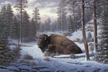Yellowstone Buffalo Wildlife Canvas Art Prints | RW Hedge The Guardian