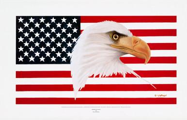 Fine Art Prints   American Eagle by Harold Hoffman