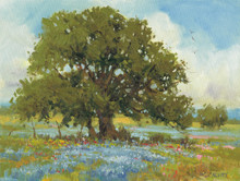 Bluebonnet Oak by H. C. Zachry