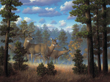 Whitetail Family by R. W. Hedge