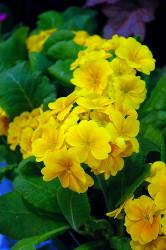 http://d3d71ba2asa5oz.cloudfront.net/12001418/images/f605-08.jpg?refresh