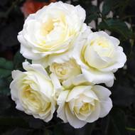 https://d3d71ba2asa5oz.cloudfront.net/12001418/images/rosesmilwaukeescalatrava.jpg?refresh