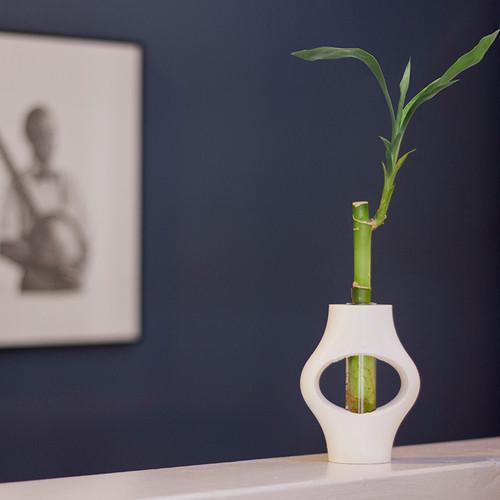 Serenity Elan Lucky Bamboo White Ceramic Vase Live Trends