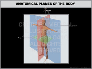 Exhibit of Anatomical Planes of the Body - Print Quality Instant Download