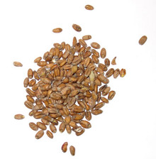 Briess Red Wheat Malt