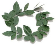 Green Laurel Leaf Headband.