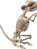 Natural Rat Skeleton Prop, Halloween Fancy Dress Accessories