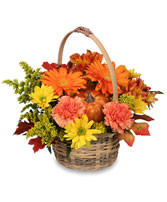 A delightful mixture of fall daisies and chrysanthemums in willow basket.