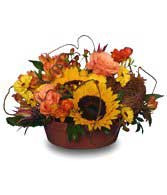 A festive centerpiece of traditional fall favorites, in autumn colors perfect as a centerpiece for entertaining or hostess gift.  Great way to say thank you for a job well done, or for any occasion, flowers from Rine's Say It Best...