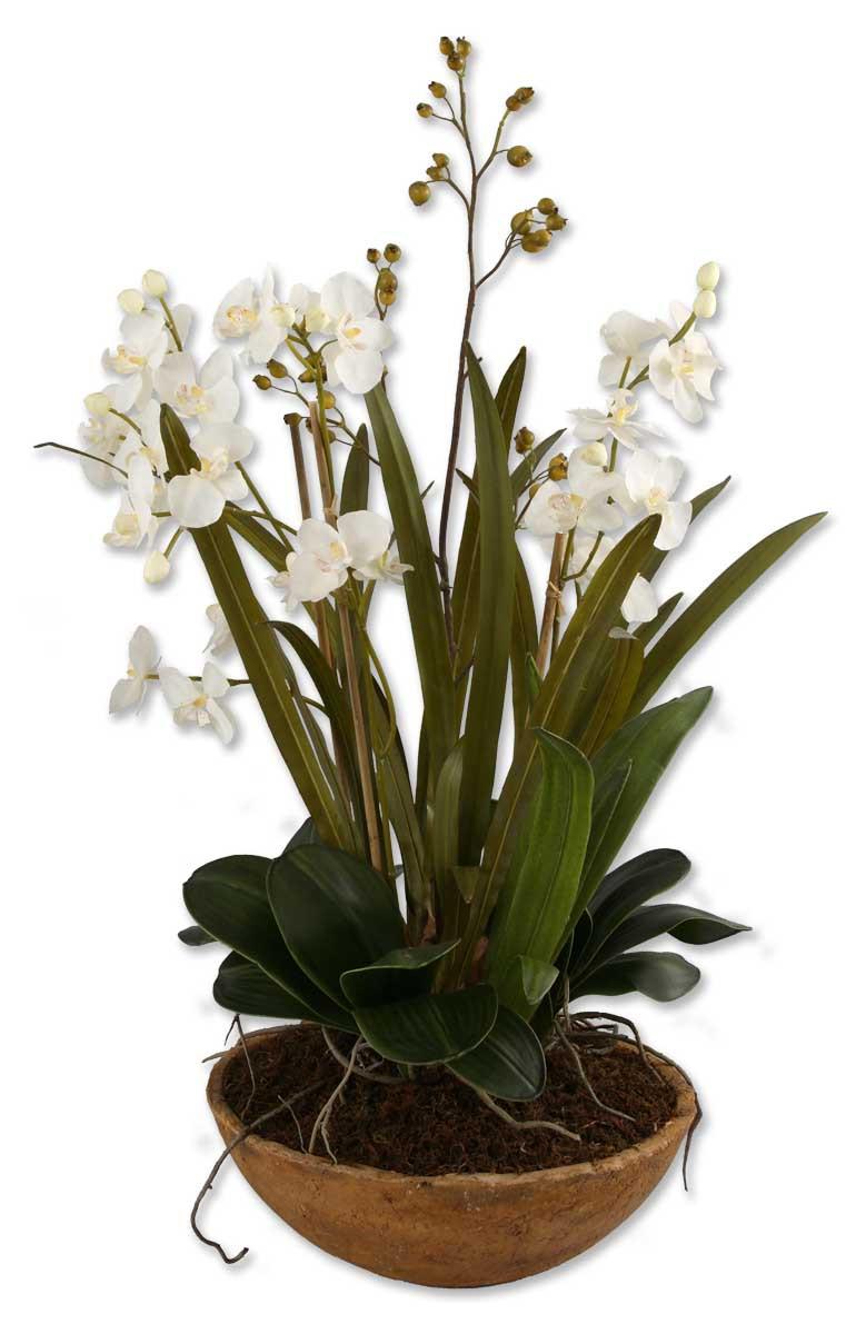 Moth Orchid Planter Essentialsinside
