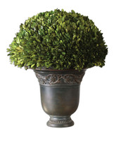 Preserved Boxwood Globe Botanical Plant